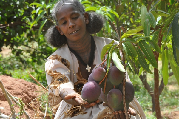 A client of REST shows off her mango tree. Photo courtesy of REST Ethiopia.